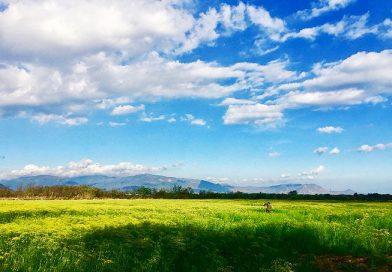 """Mẹo đi đến cánh đồng hoa thì là hiện đang """"hot"""" ở Ninh Thuận"""